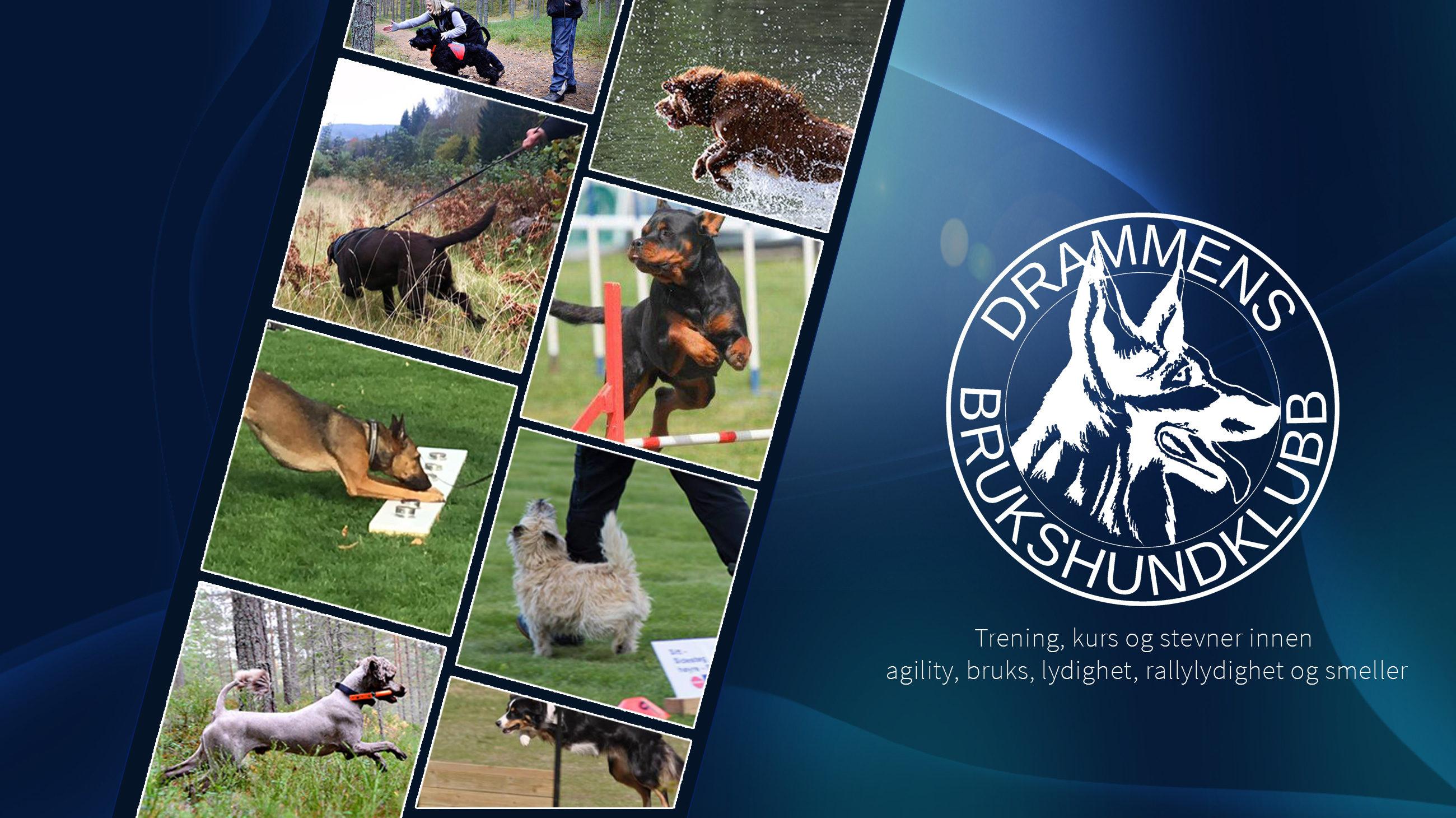 Drammens Brukshundklubb -